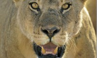 В москву тайно прибыли 100 диких зверей