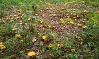 Грибов в лесу пока мало, но на супчик хватит
